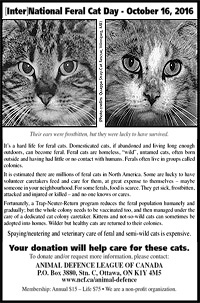 Feral Cat Advertisement
